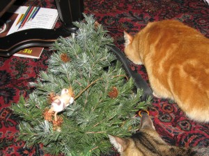cat toy stuck in tree